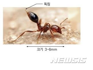 '맹독성 독개미 유입될라' 방역당국 비상